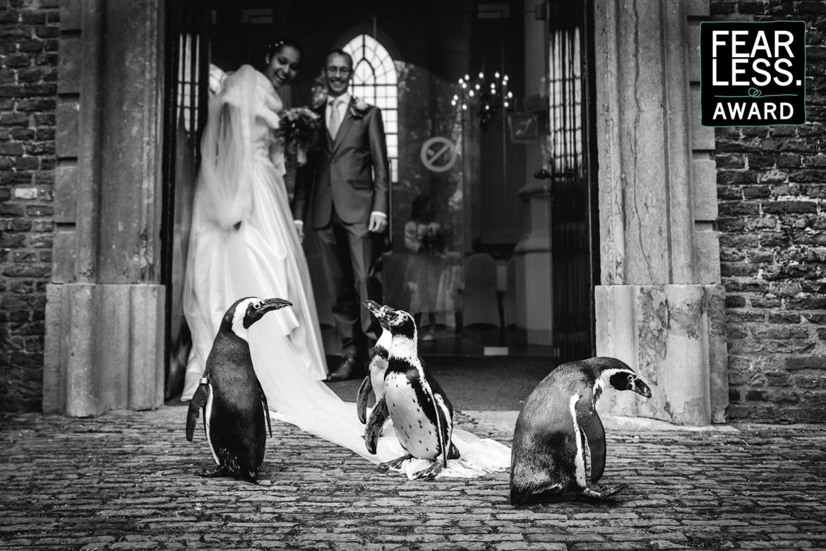 fearless wedding photography award three penguins penguin standing on wedding dress bride entrance church door groom