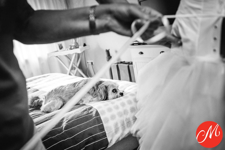 masters_of_wedding_photography_UK award photo getting ready bride wedding dress dog on bed looking sad